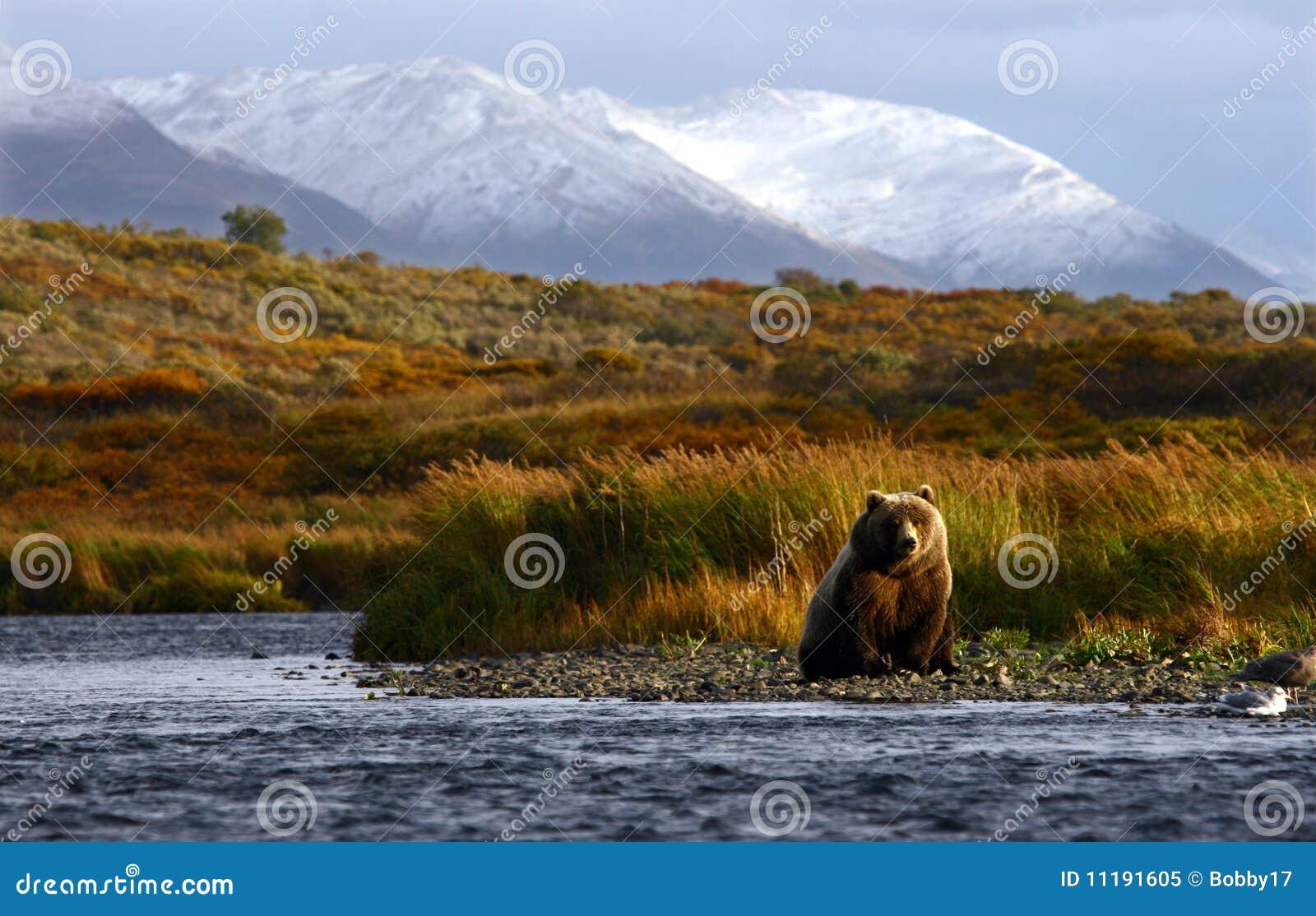 Niedźwiadkowy kodiak