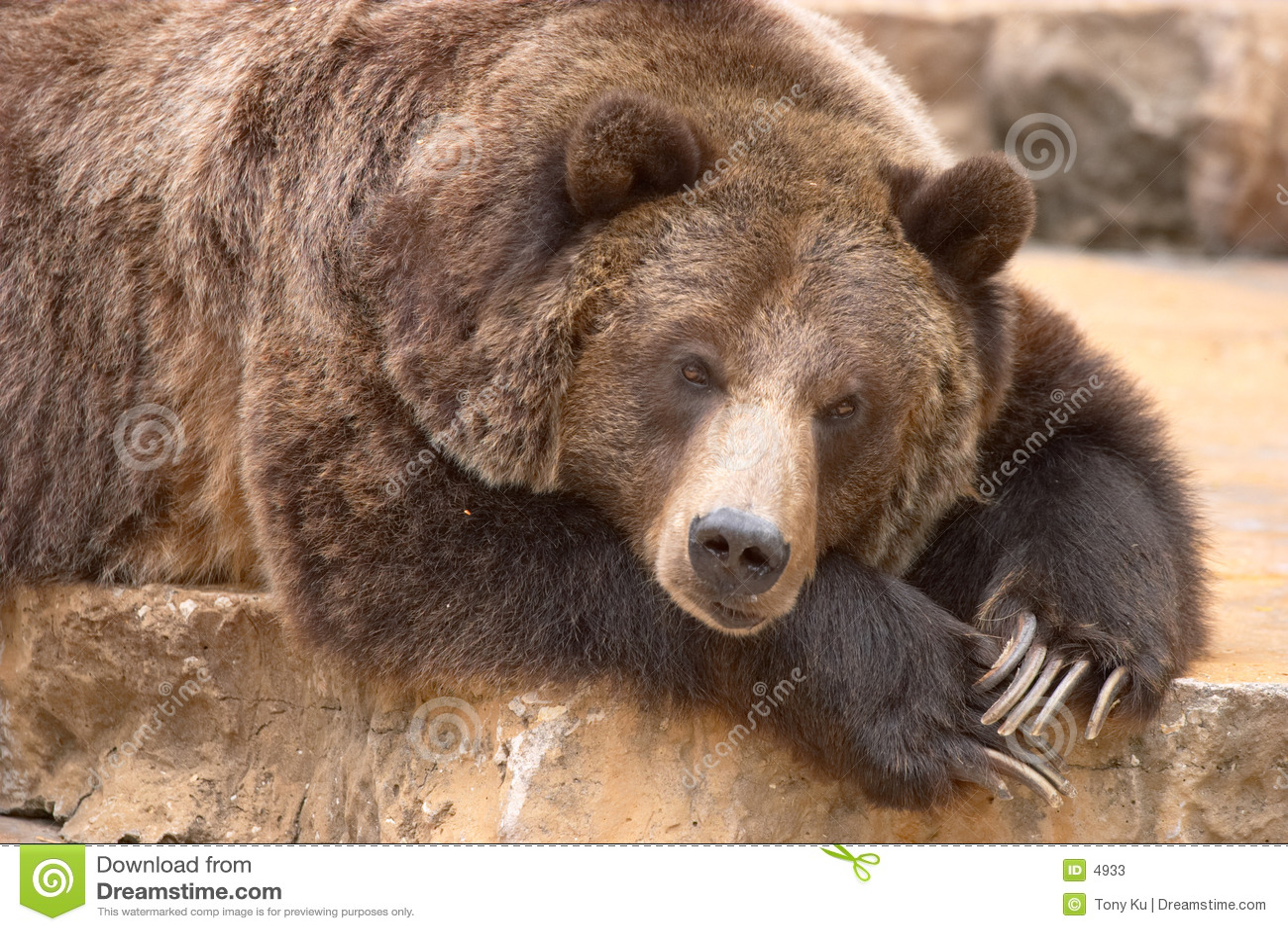 Niedźwiedź śpi