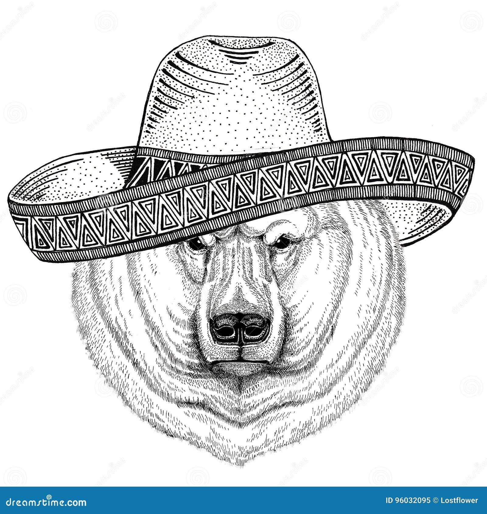 Niedźwiedzia polarnego dzikie zwierzę jest ubranym sombrero Meksyk fiesta meksykanina przyjęcia ilustracyjnego Dzikiego zachód