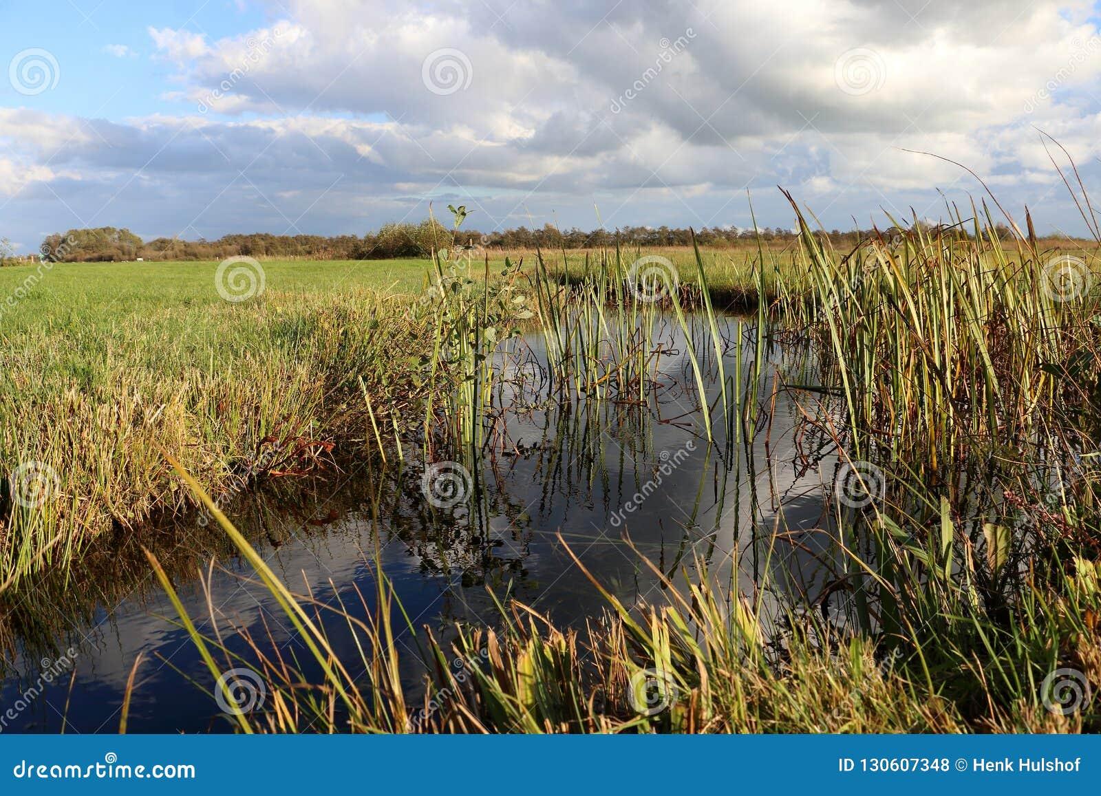 Niederländische Landschaft in Overijssel