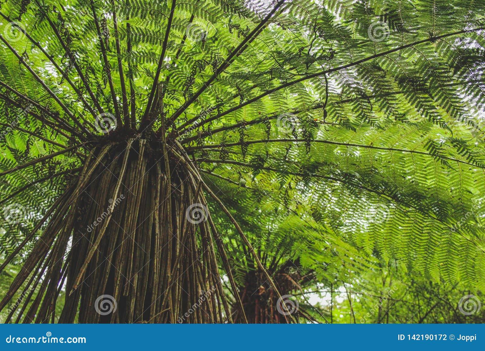 Niedrige Winkelsicht des Baumfarns im Regenwald in Neuseeland, Südinsel