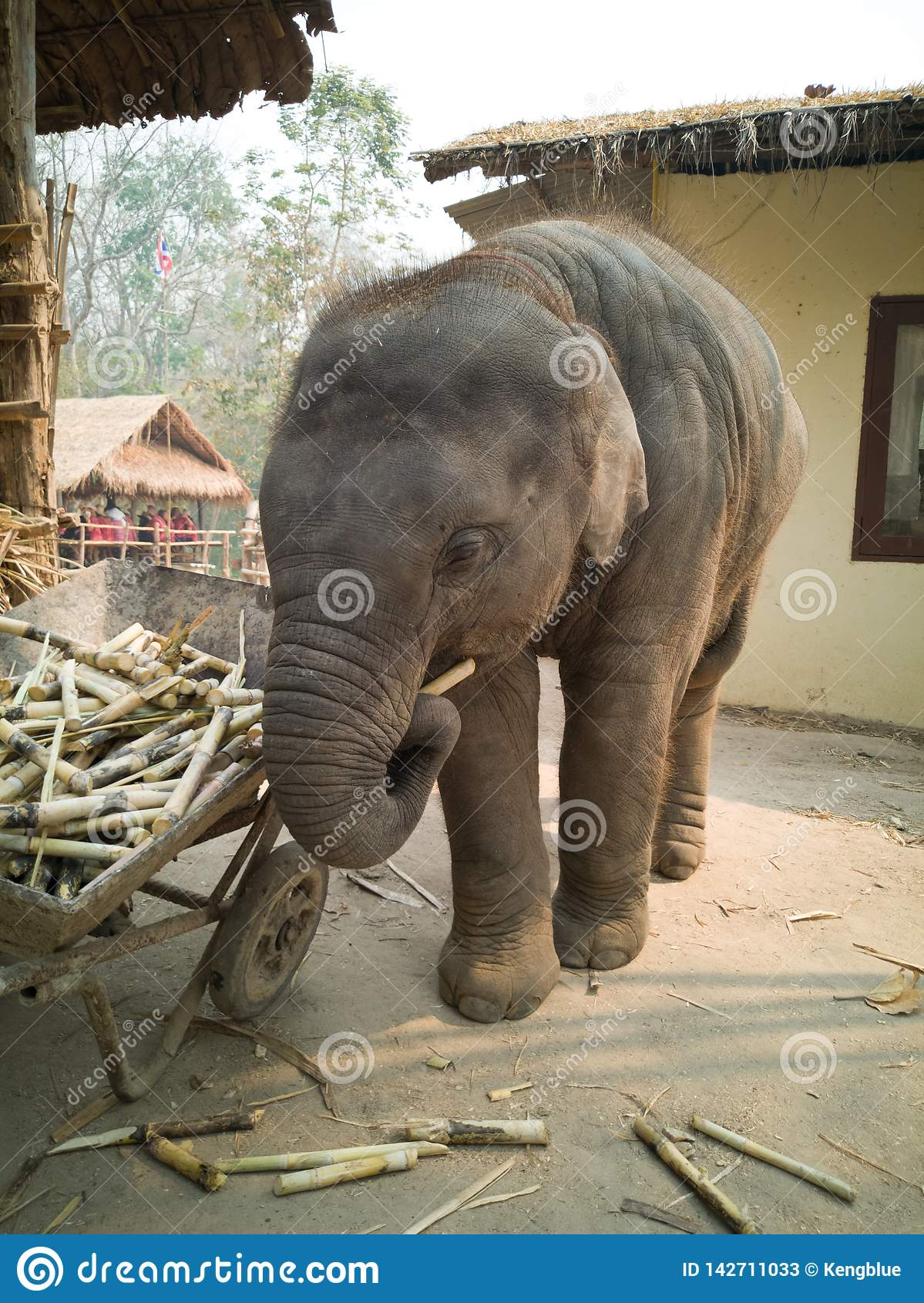 Niegrzeczny dziecko słoń