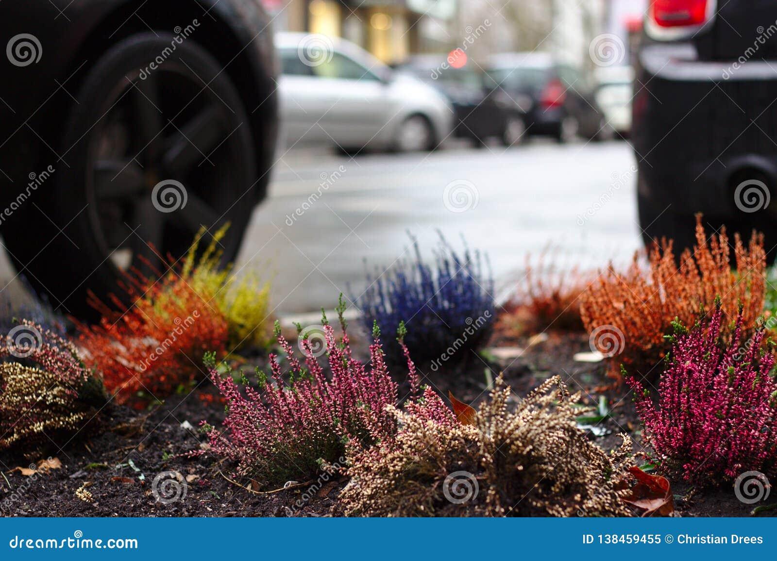Niektóre barwi w mieście z miastowym ogrodnictwem