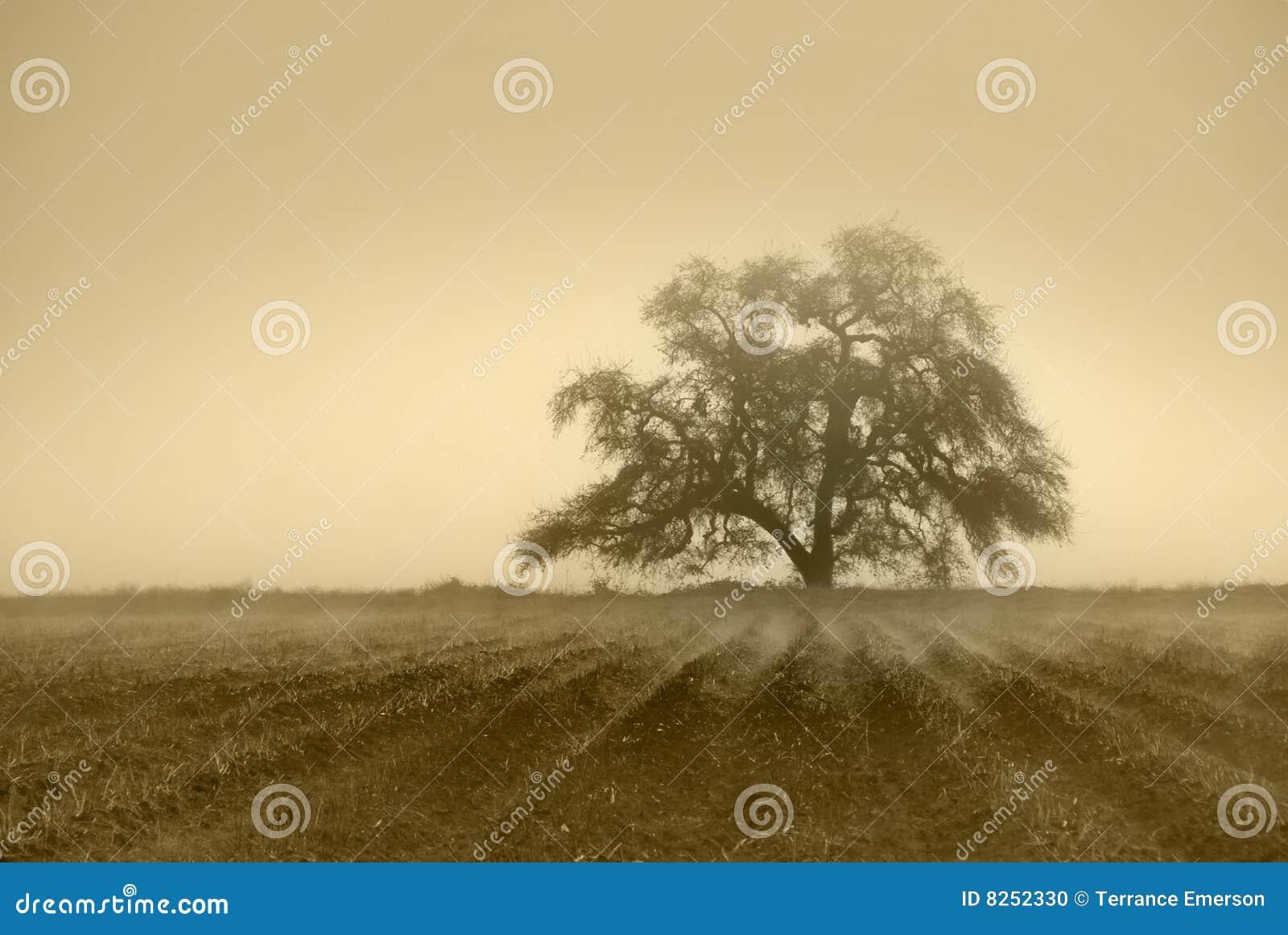 Niemy dębowy drzewo