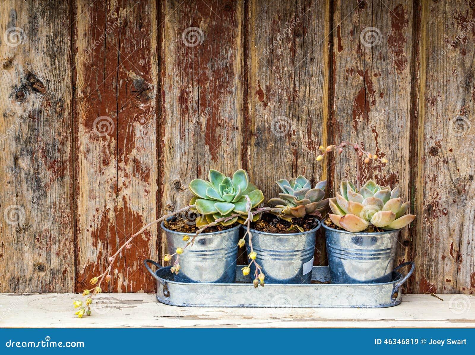 Nieociosane rośliny