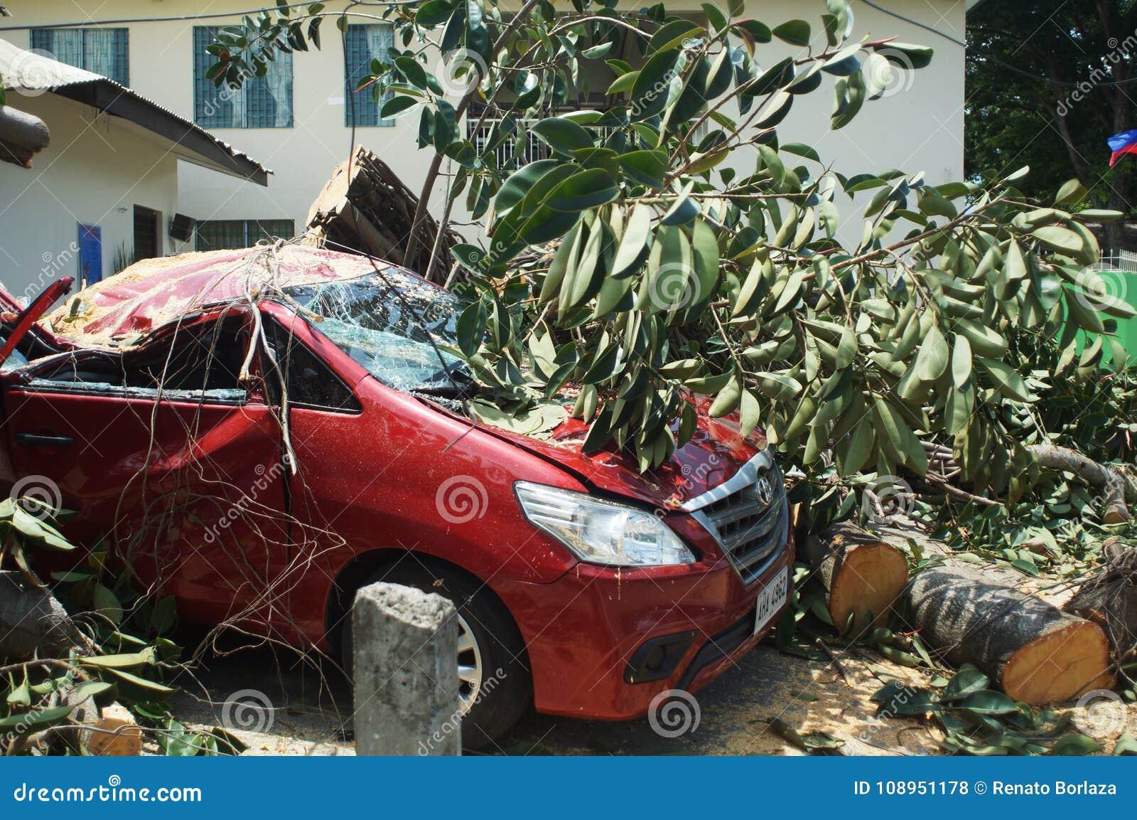 Nieoczekiwanie spadał na parkującym czerwonym samochodzie na słonecznym dniu i spokoju duży gumowy drzewo