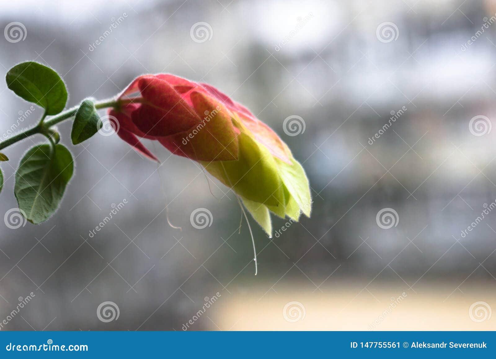 Niesamowicie piękny kwiat z zamazanym tłem