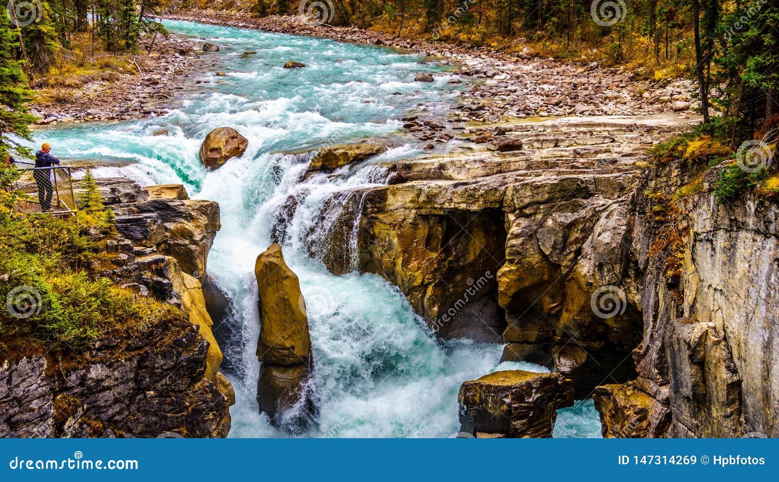 Niespokojna turkus woda Sunwapta rzeka Spada w Jaspisowym parku narodowym gdy ono bębnuje w dół Sunwapta
