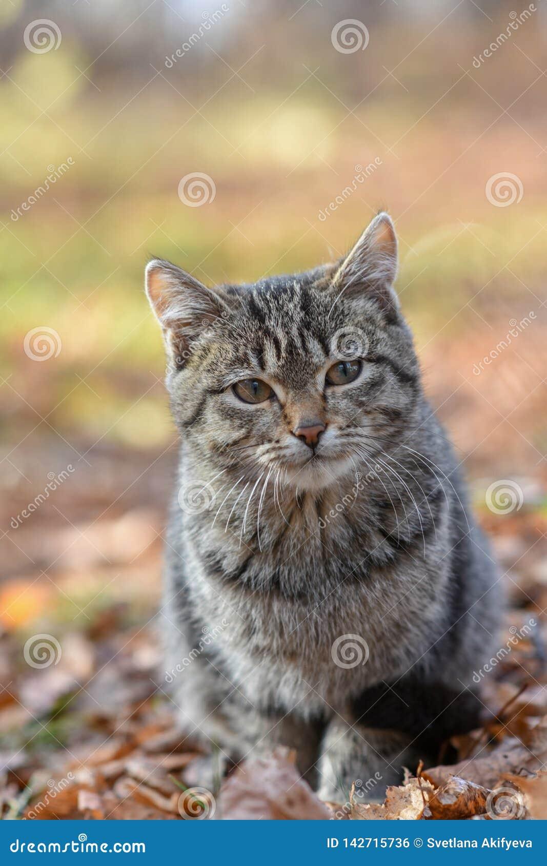 Nieszczęśliwi koty żyją na ulicach, szuka jedzenie