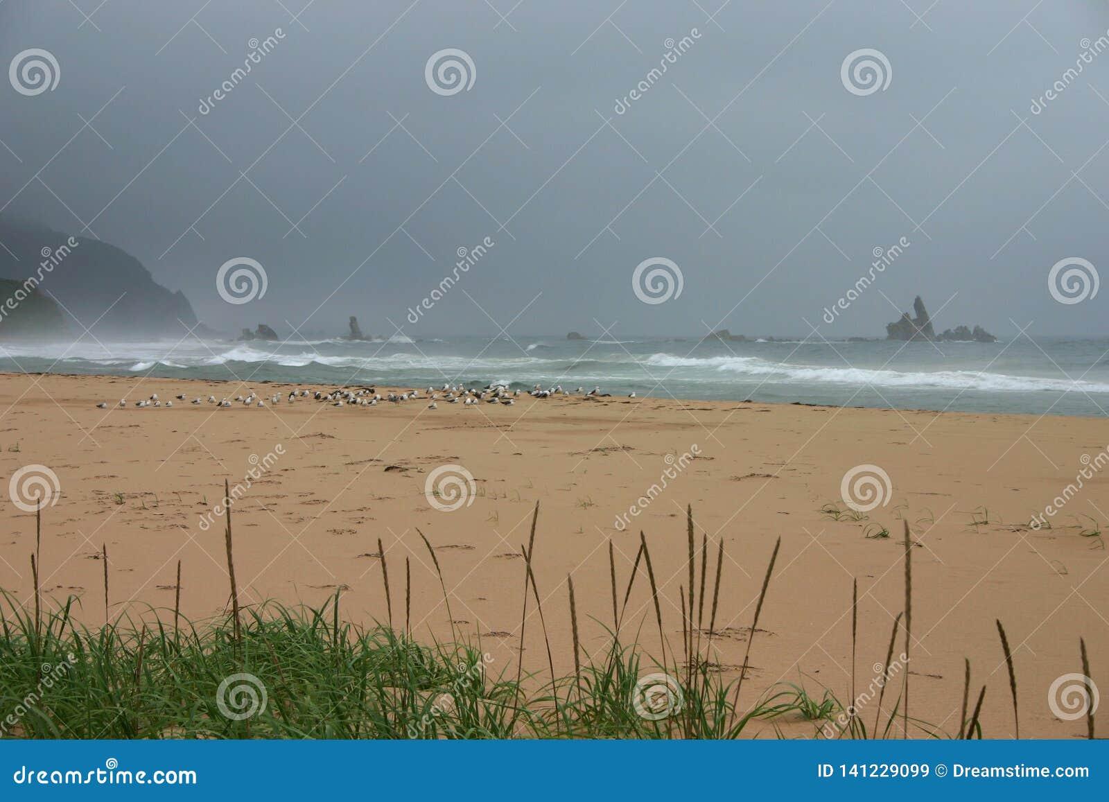 Niet-vliegt weer - zeemeeuwen die startontruiming wachten