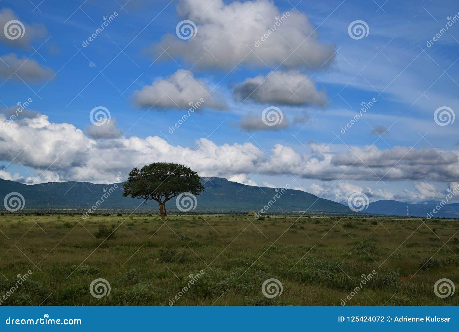 Nietknięta natura, drzewo, góra i niebieskie niebo, savannah afrykański