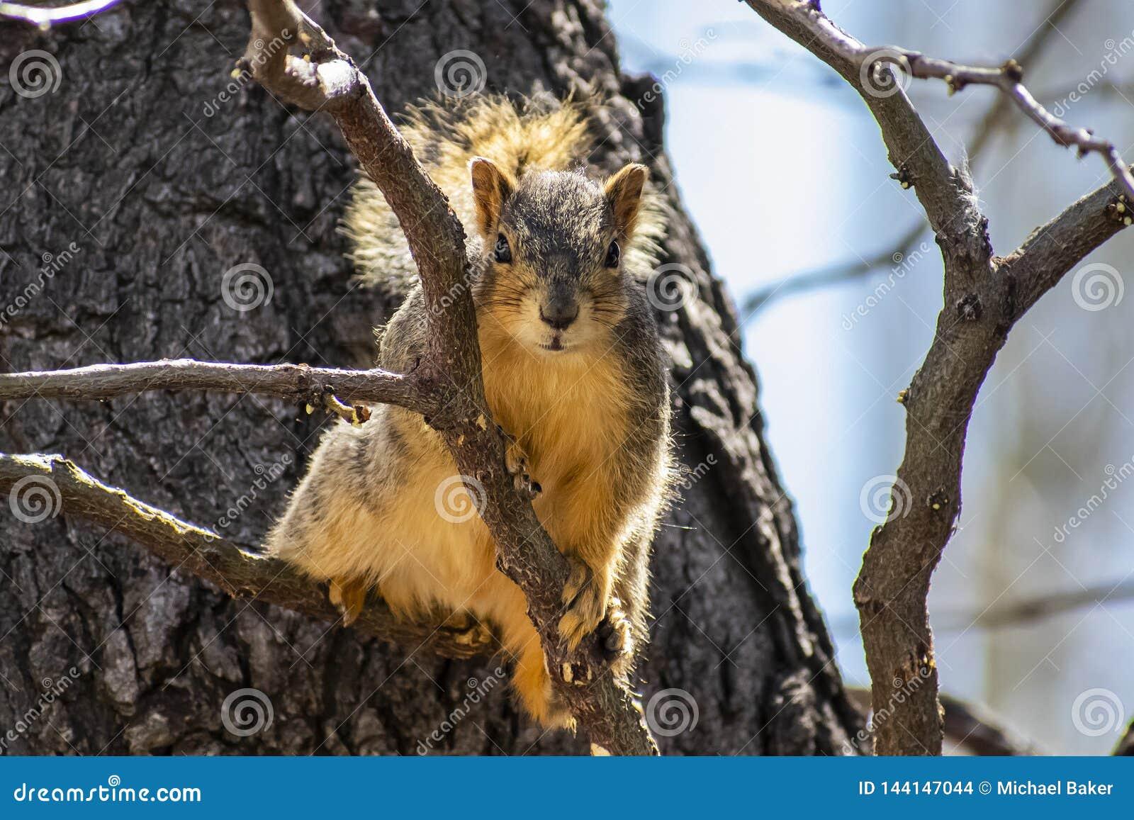 Nieuwsgierige Eekhoorn in een boom