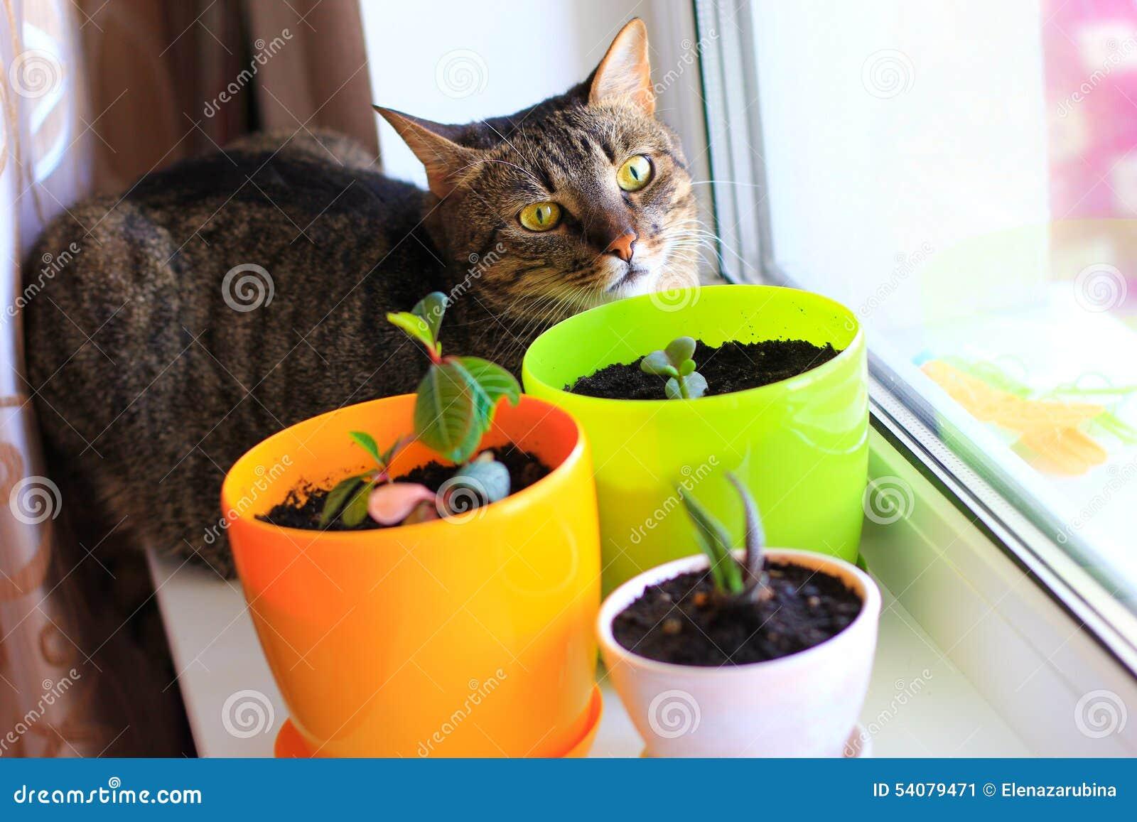Nieuwsgierige kat en huisinstallaties