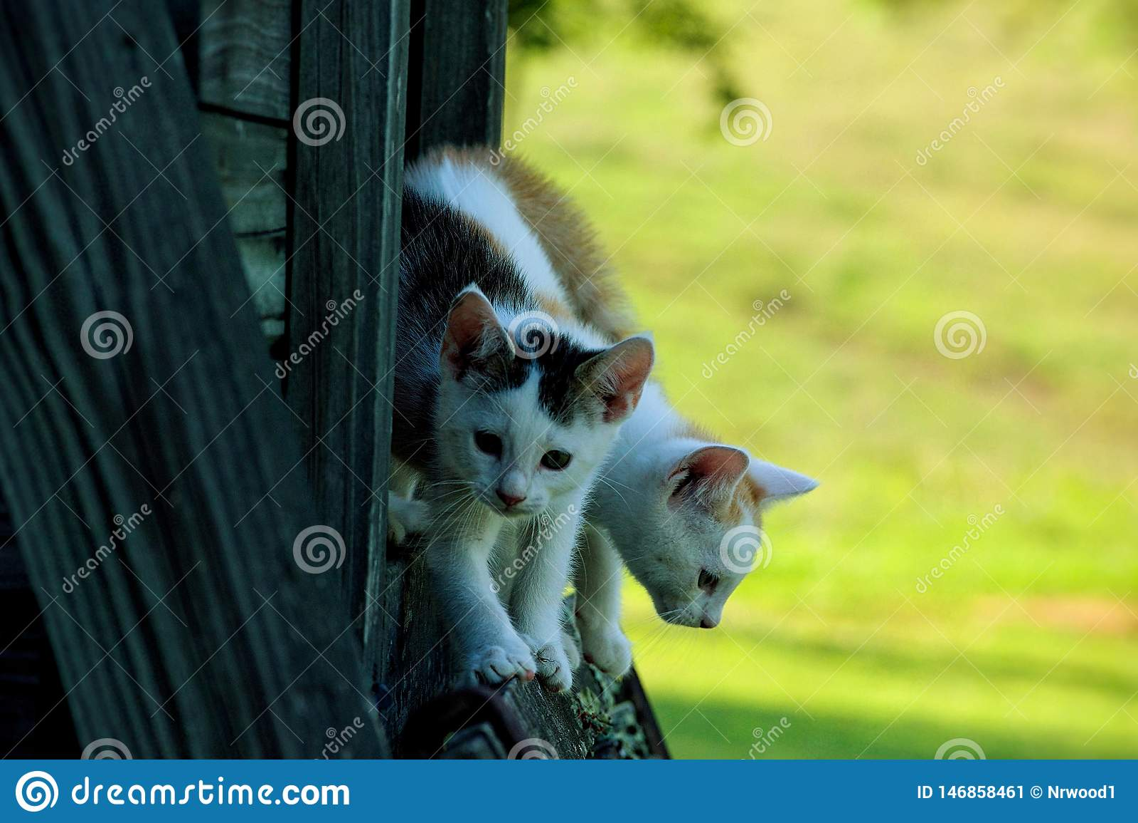 Nieuwsgierige katjes die op bank spelen