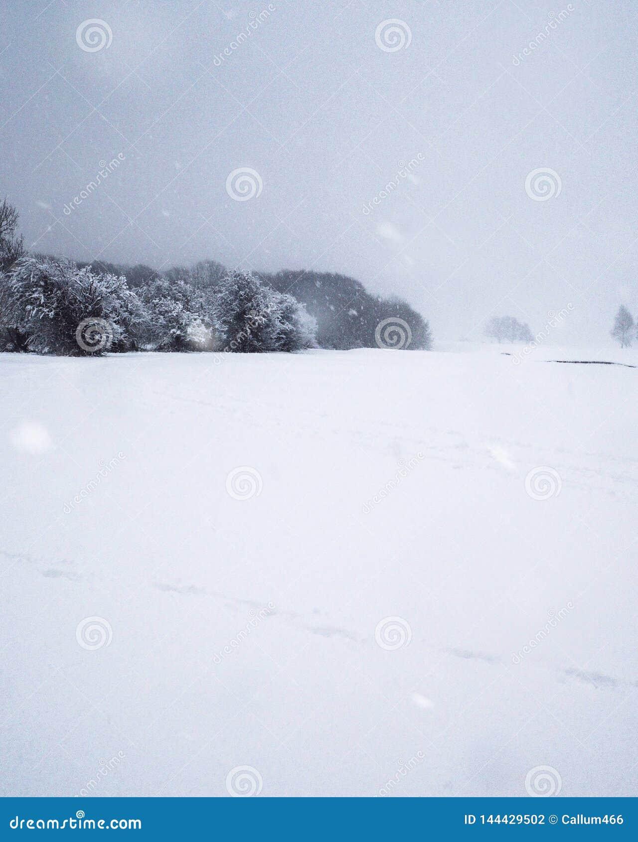 Nieve caida sobre un borde del arbolado