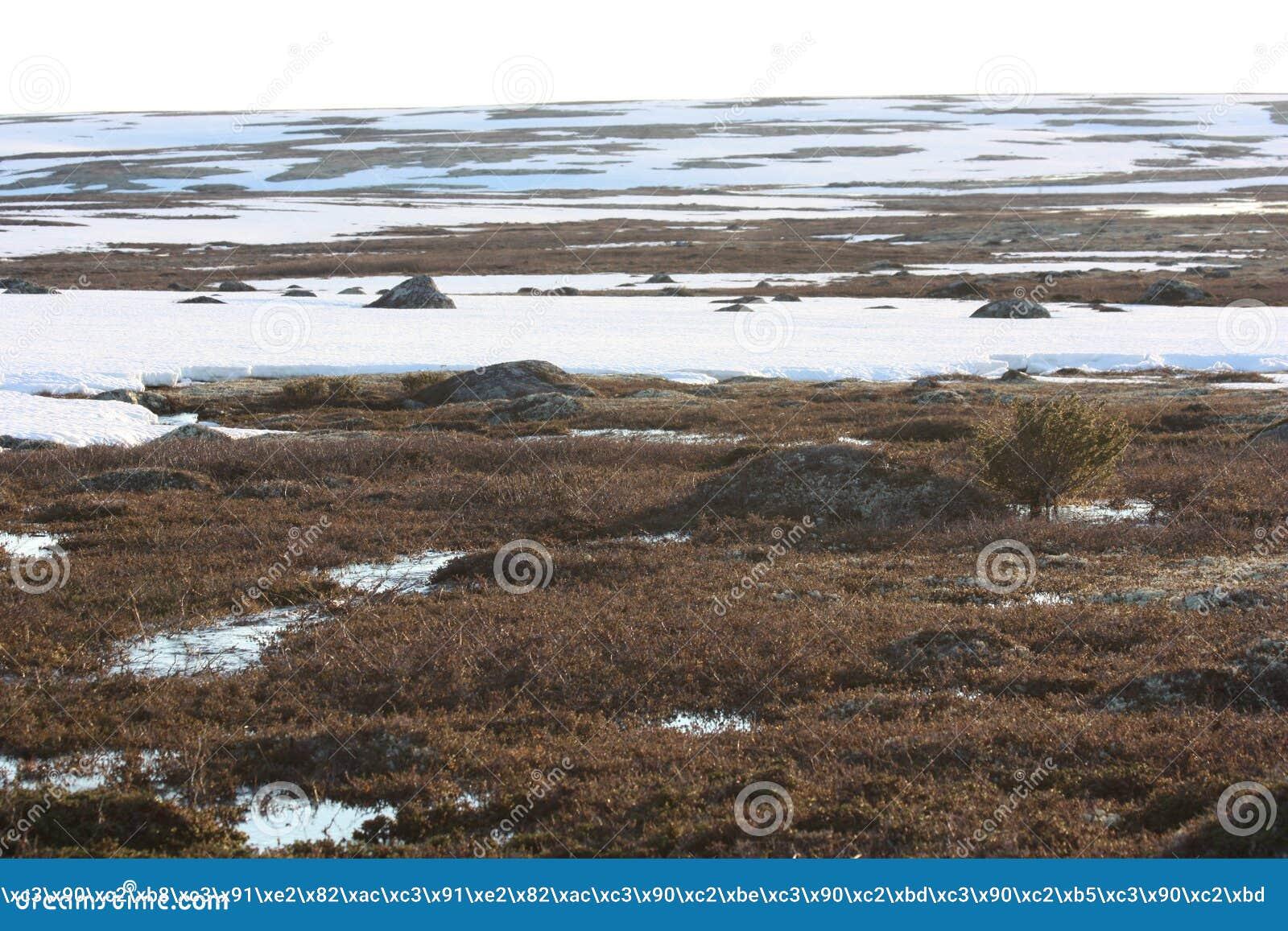 Nieve en la primavera la tundra