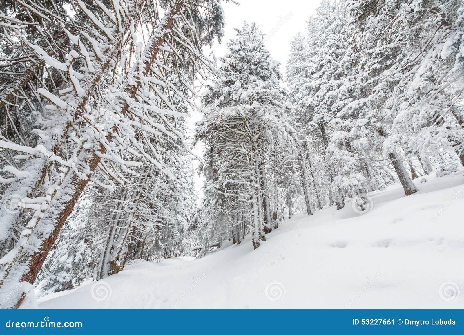Nieve, invierno, paisaje, nevoso
