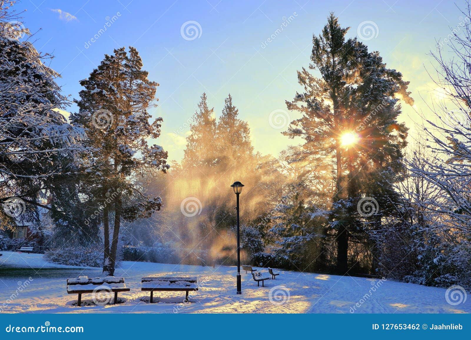Nieve que sopla en el país de las maravillas mágico del invierno a lo largo del parque del canal de la garganta, Victoria, B C
