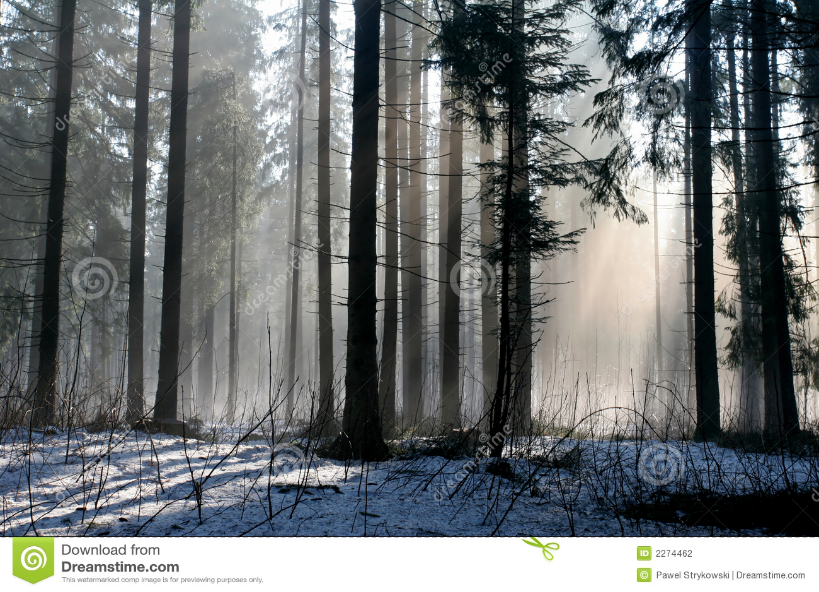 Nieve y sol