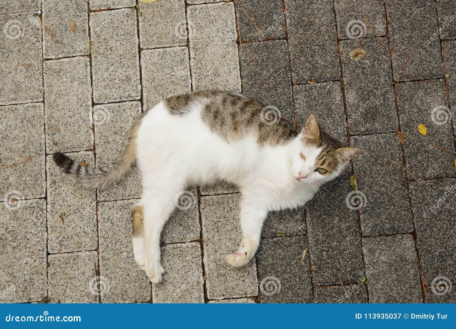 Nieważny kot z amputującą łapą
