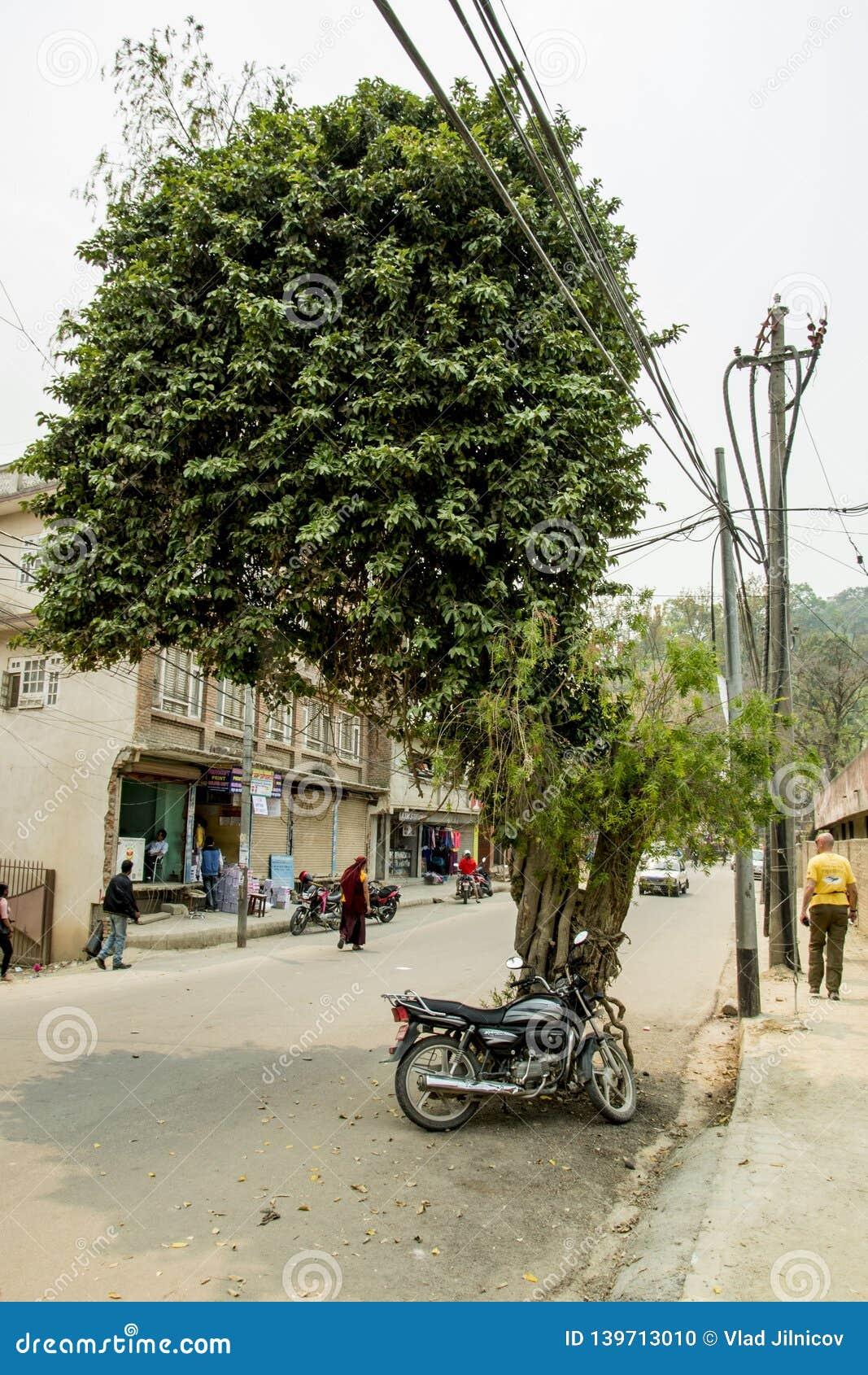 Niezwykły drzewo w ulicie
