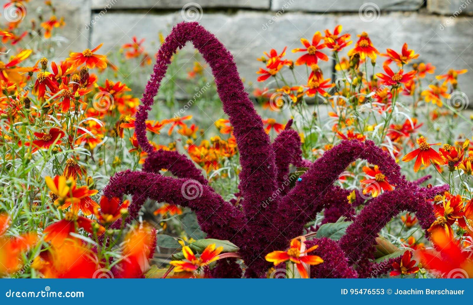 Niezwykły purpura kwiat w ogródzie
