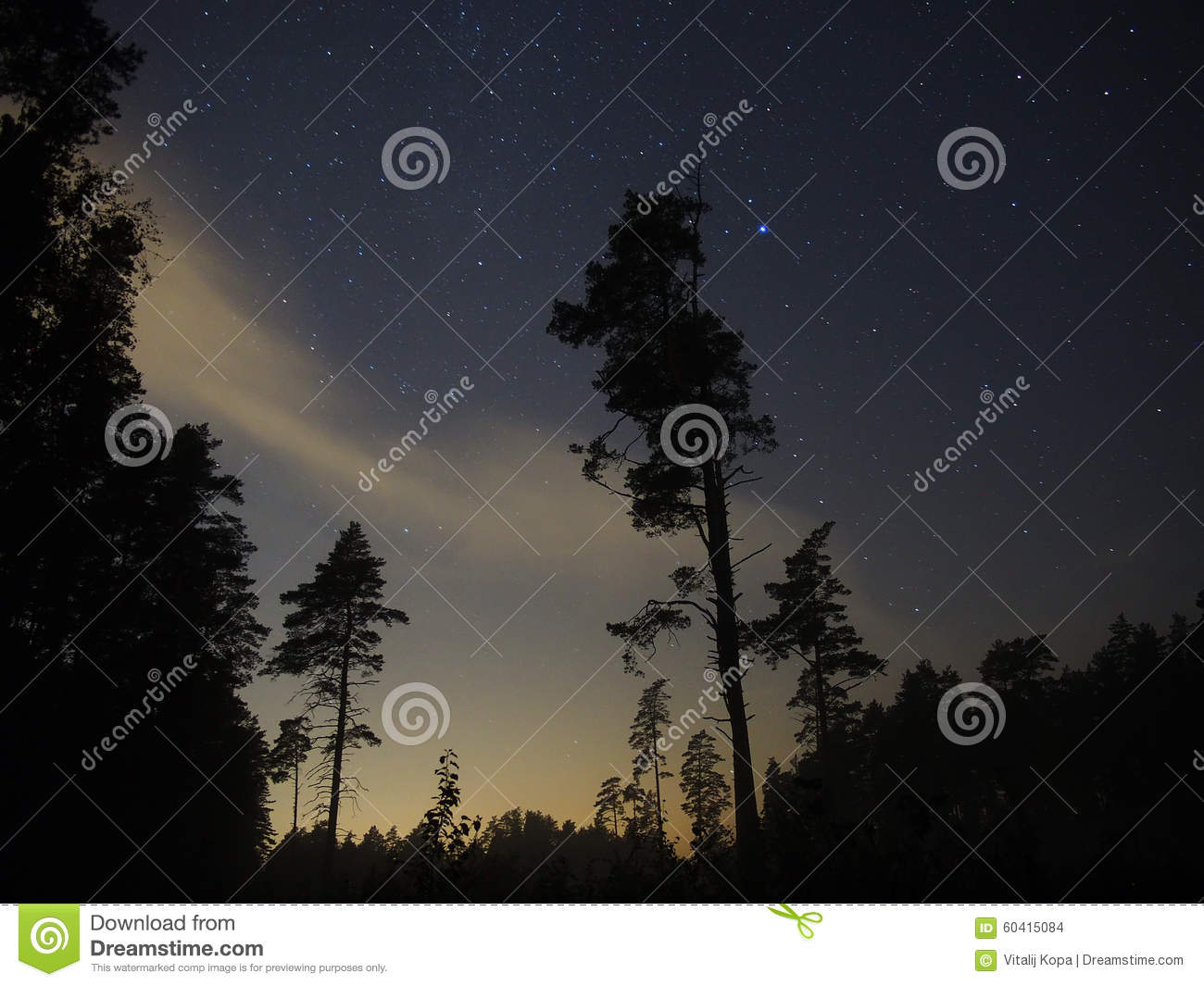 Night sky stars over forest and trees