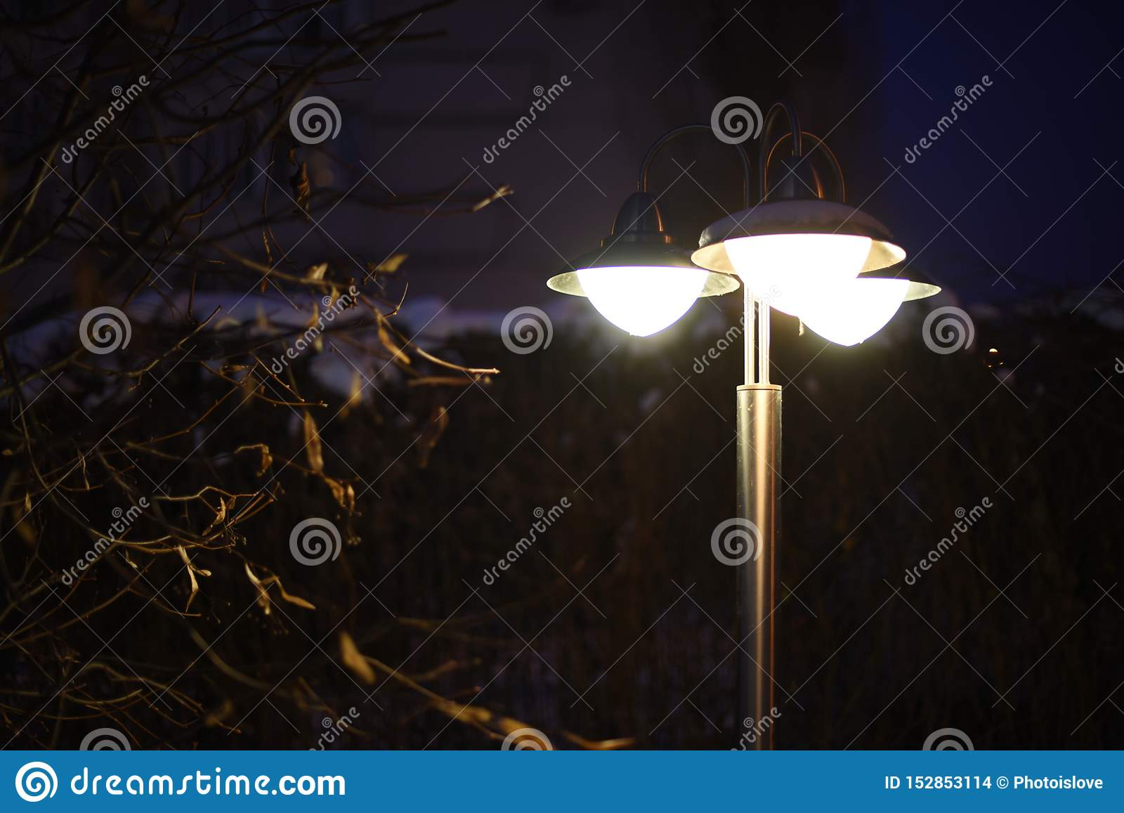 night lantern through winter branches lights the darkness. Copy space