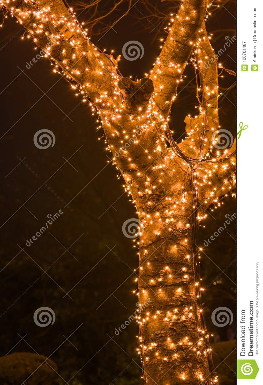 night photo of tree covered with tiny white christmas lights with blurred background
