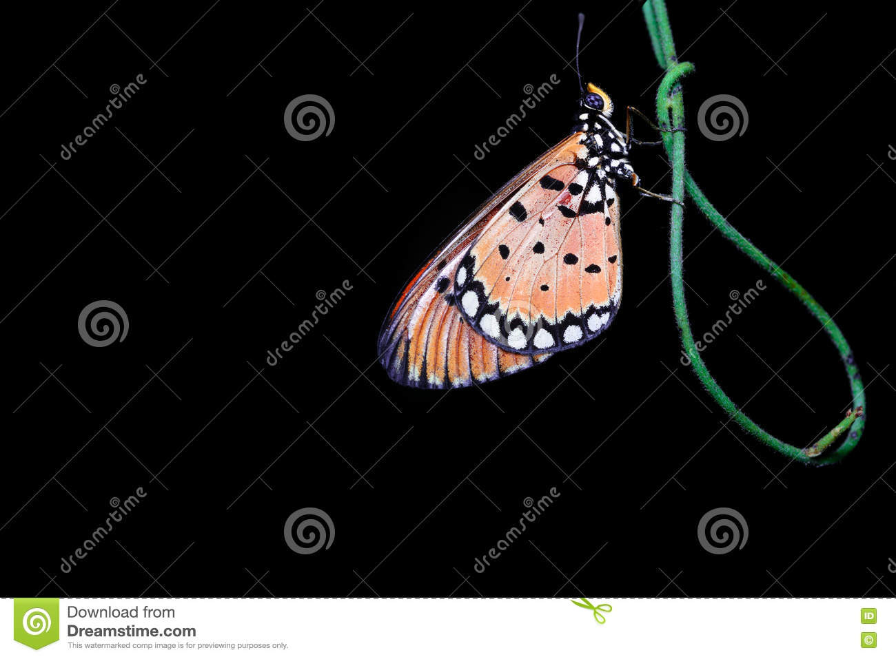 Night Shot Of A Butterfly Stock Photo Image Of Butterfly 80666304