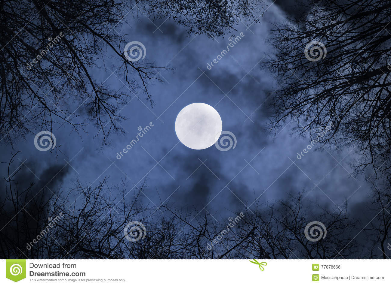 Night sky gothic landscape with full moon beneath the clouds and silhouettes of the bare trees