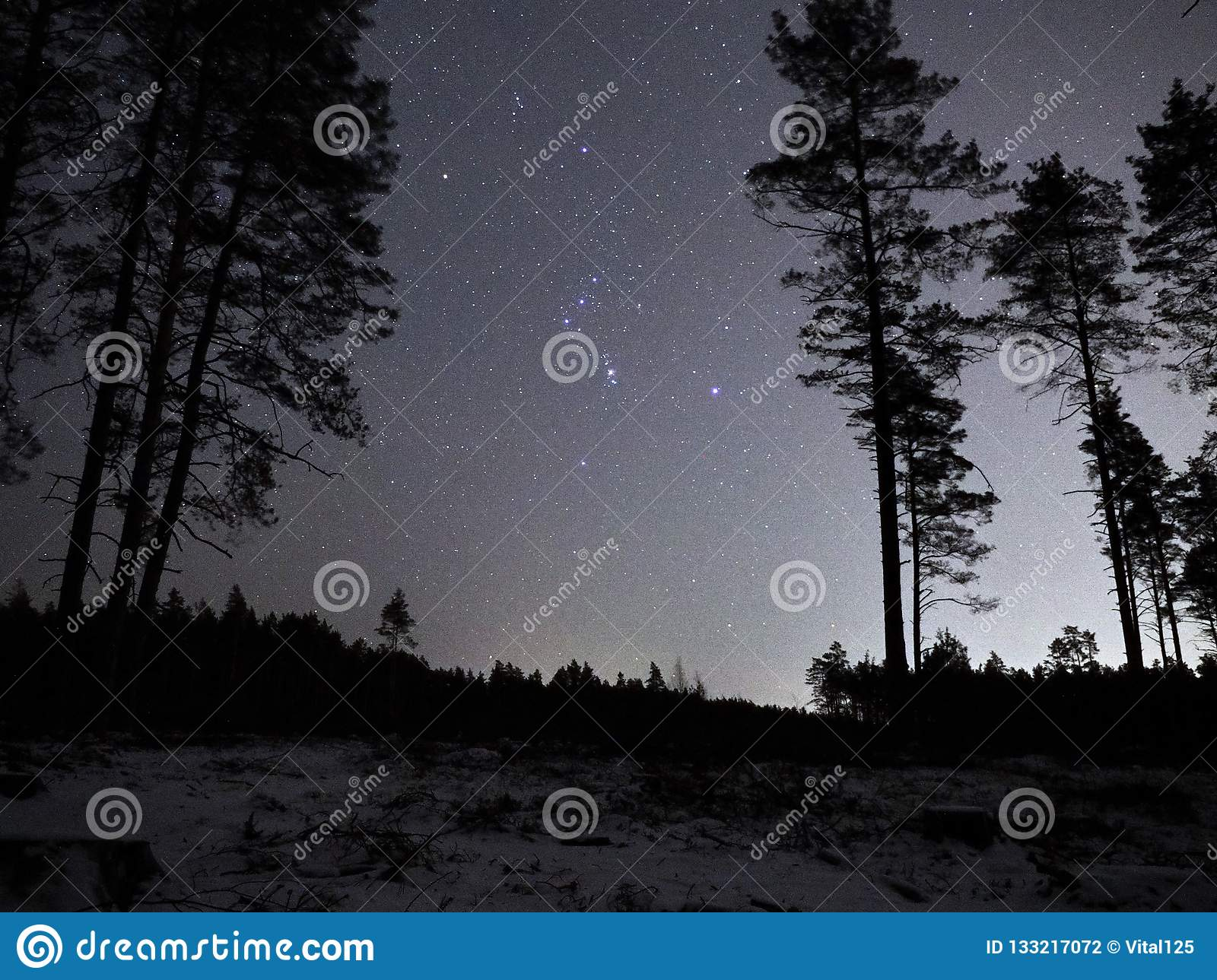 Night sky stars Orion constellation over forest