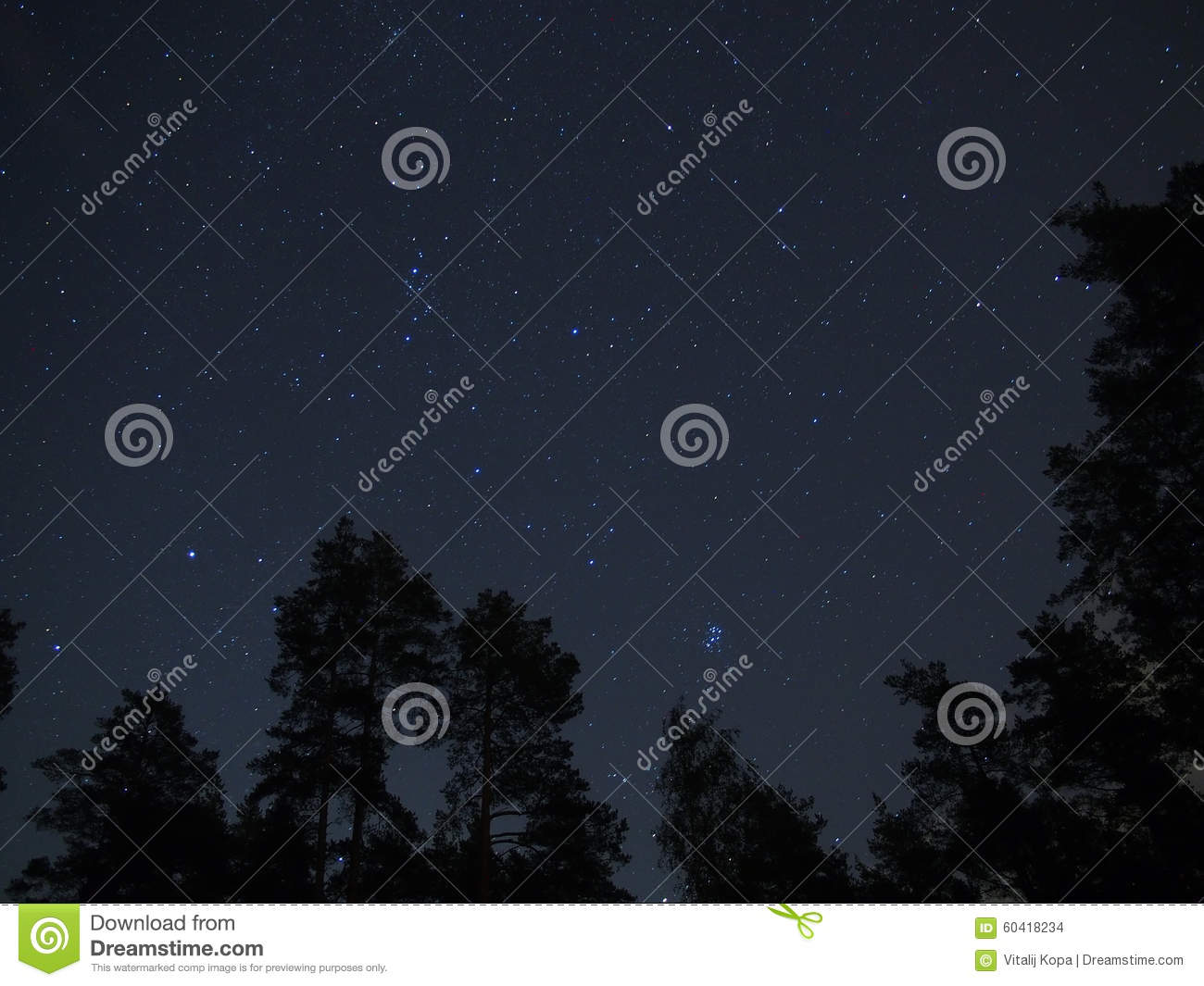 Night sky stars and pleiades over forest