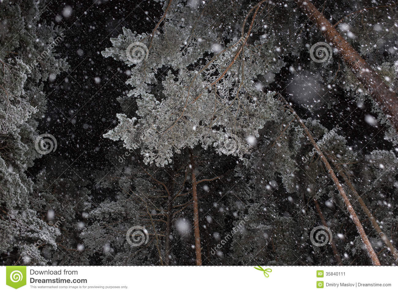 night snowfall stock image  image of branches  woods