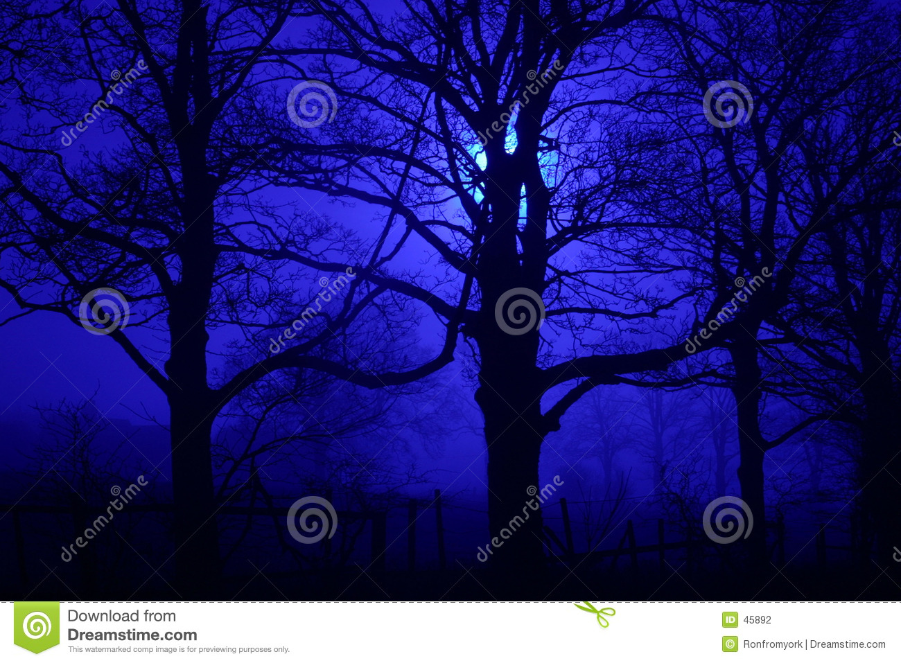 Night spooky trees