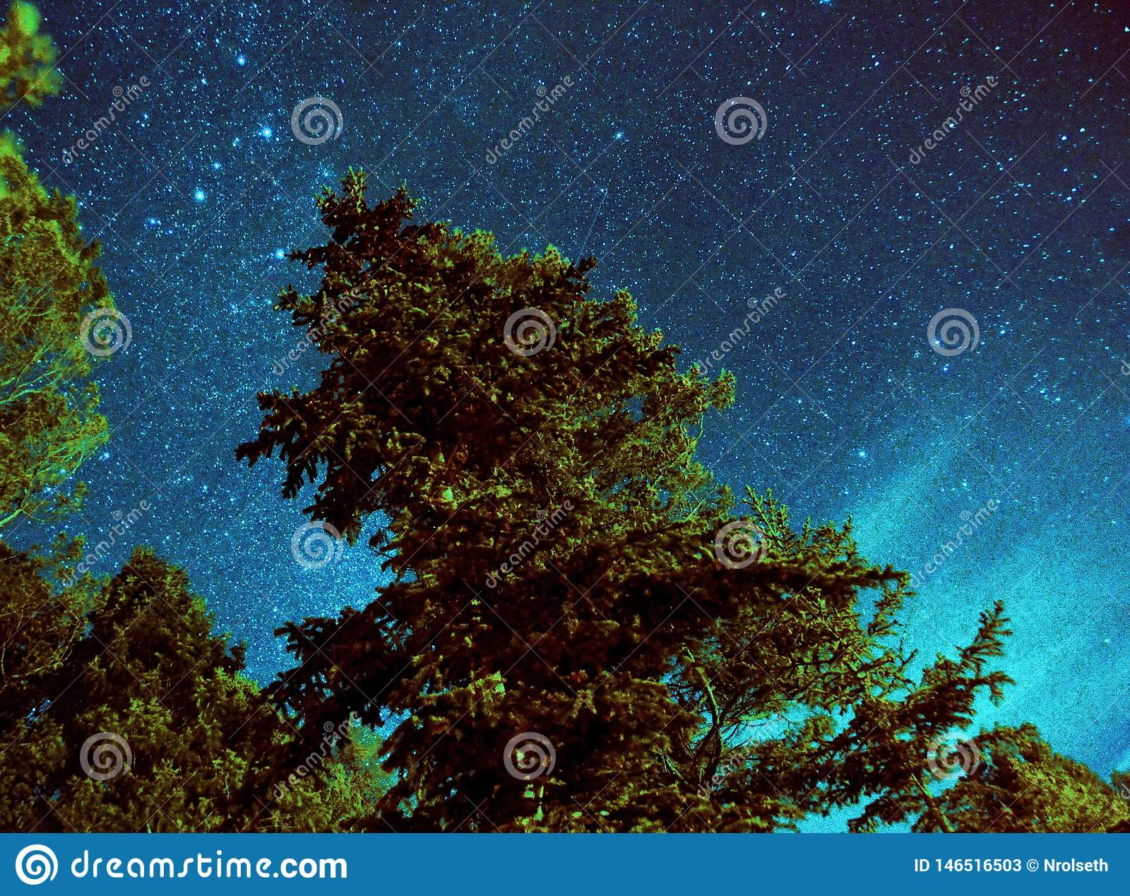 Night time tree with milky way