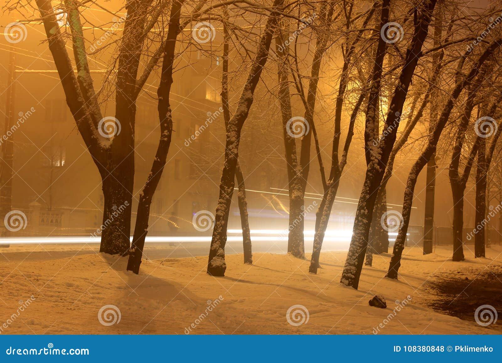 Night winter park