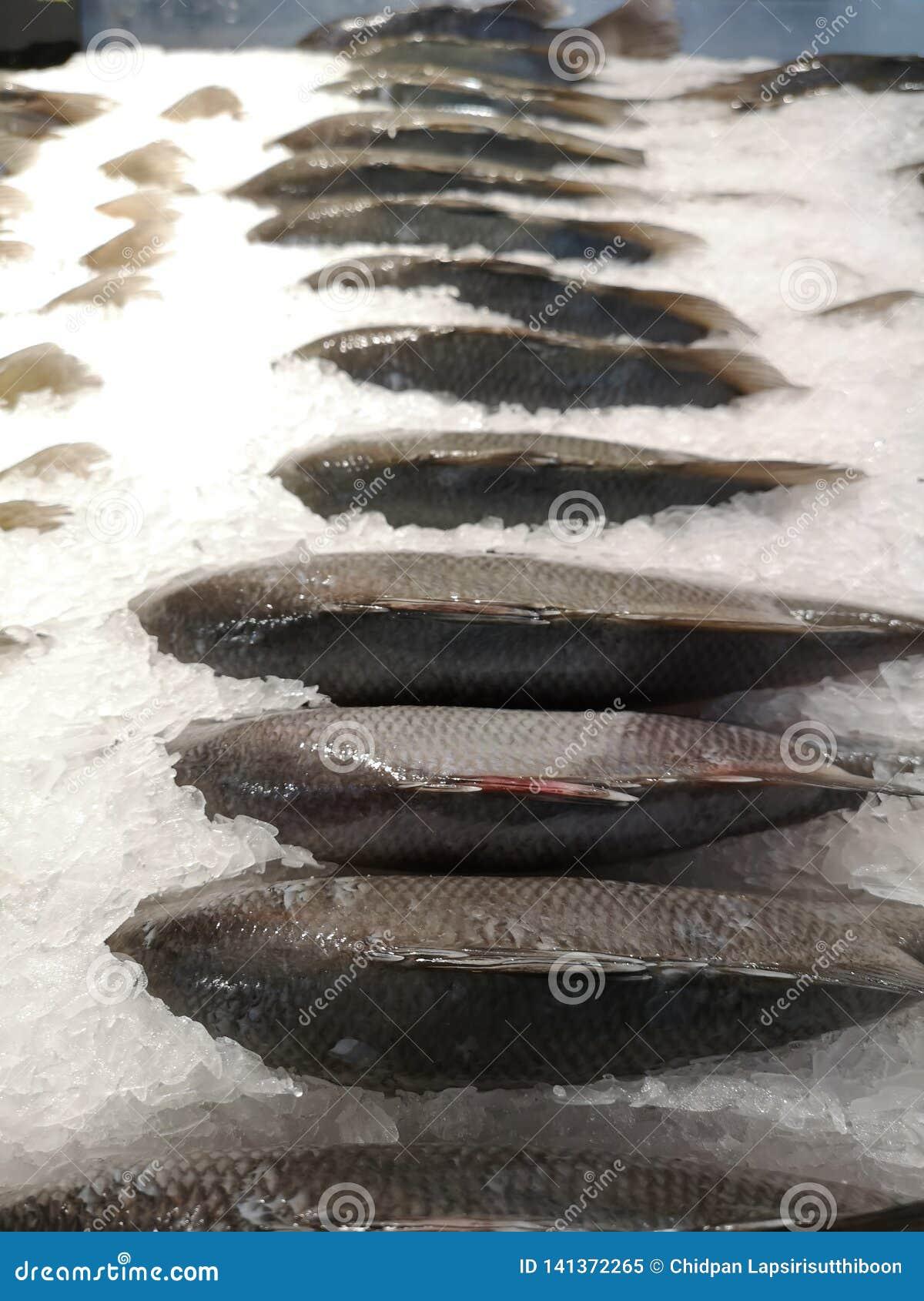 Niloticus Oreochromis fishs, φρέσκος για το μαγείρεμα της θέσης στους σωρούς πάγου στον ψυκτήρα στην υπεραγορά
