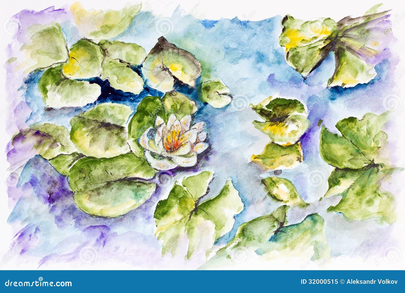 Ninfea bianca in piccolo stagno fotografia stock libera da for Piccolo stagno