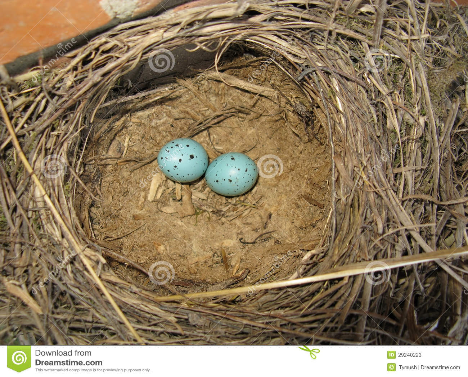 Download Ninho com ovos imagem de stock. Imagem de inside, ninguém - 29240223