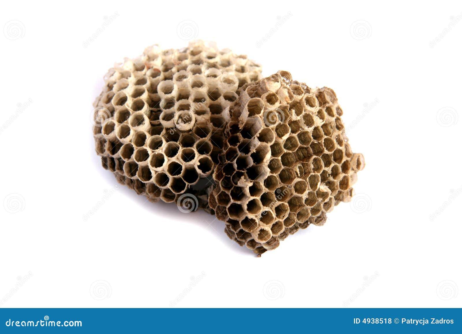 Ninho das vespas