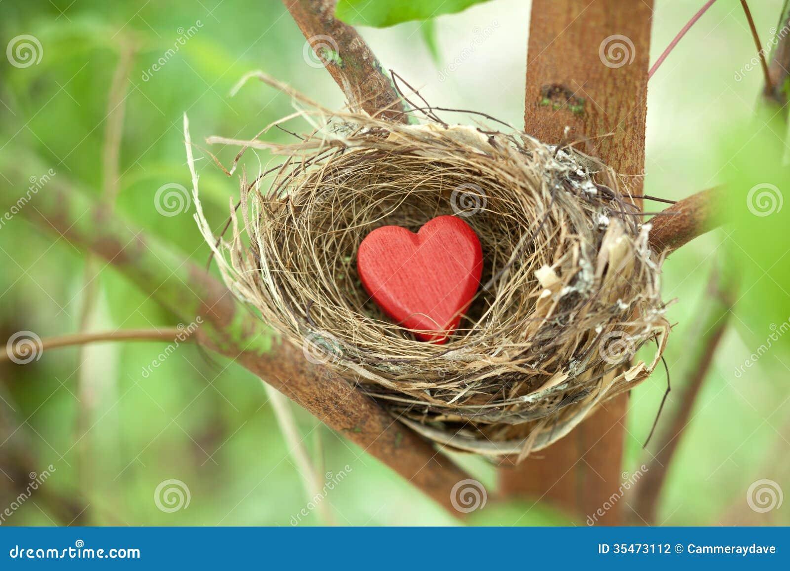 Ninho de amor da árvore