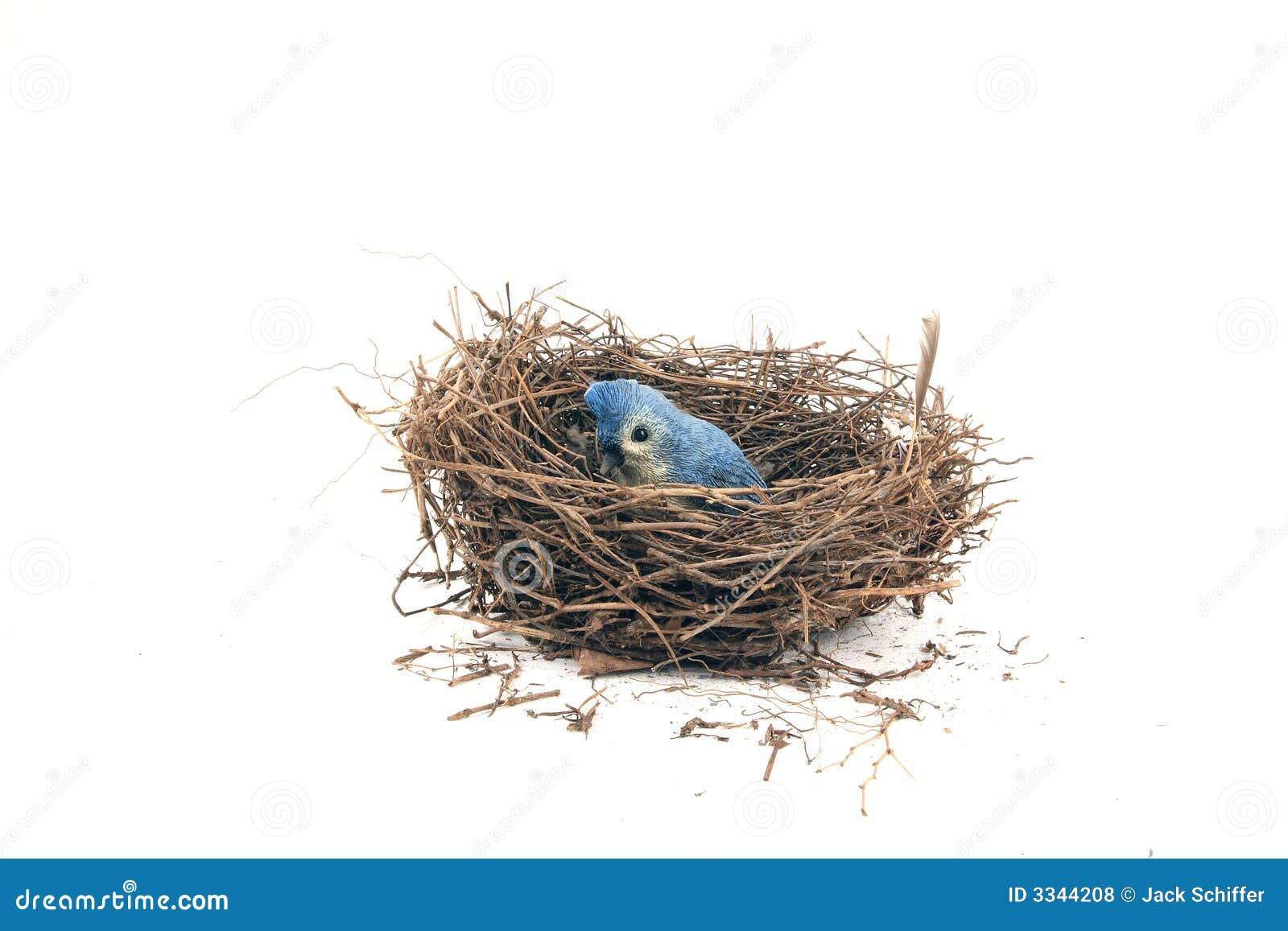 Ninho do pássaro