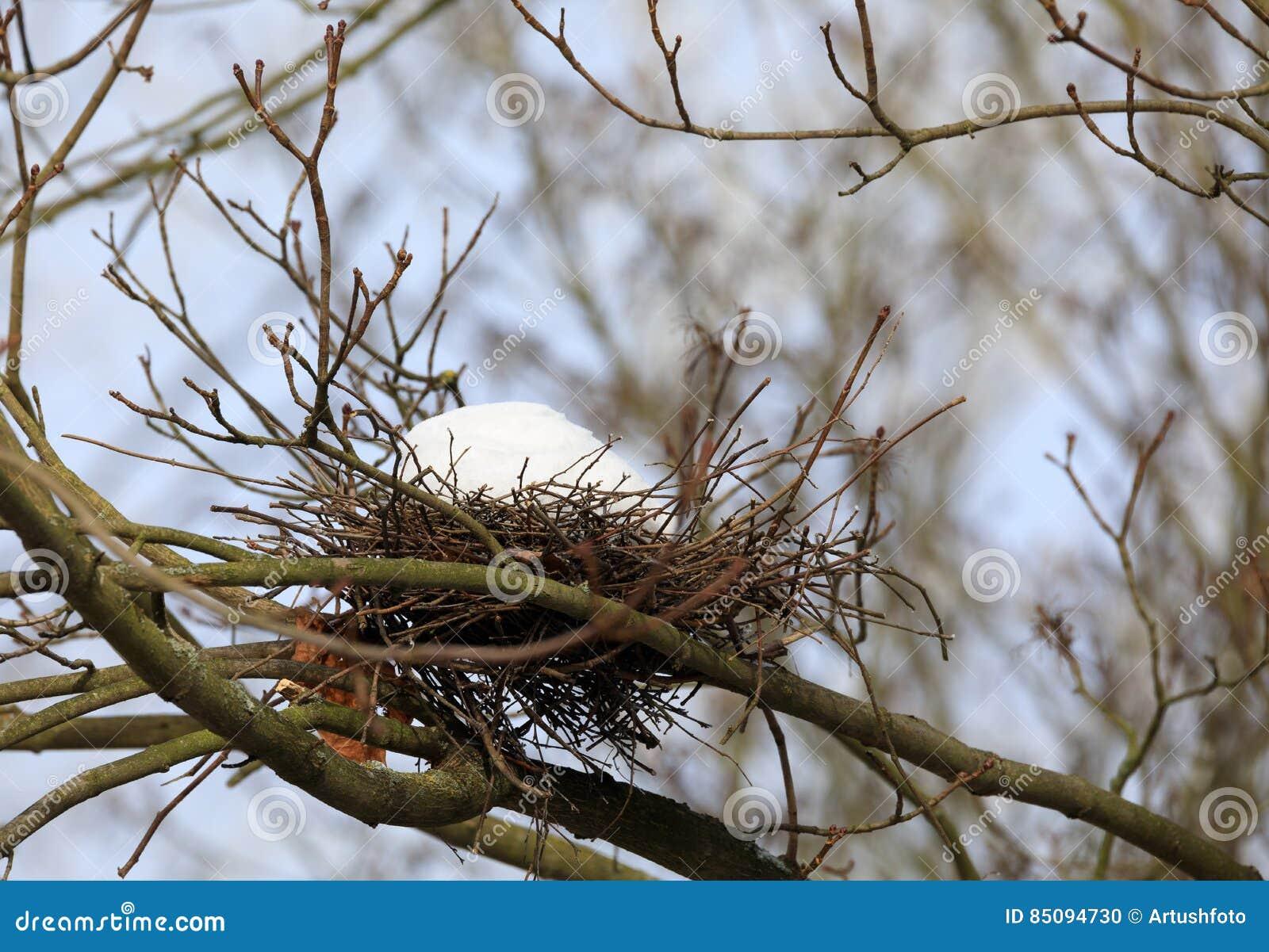 Ninho do pássaro no ramo no inverno com neve