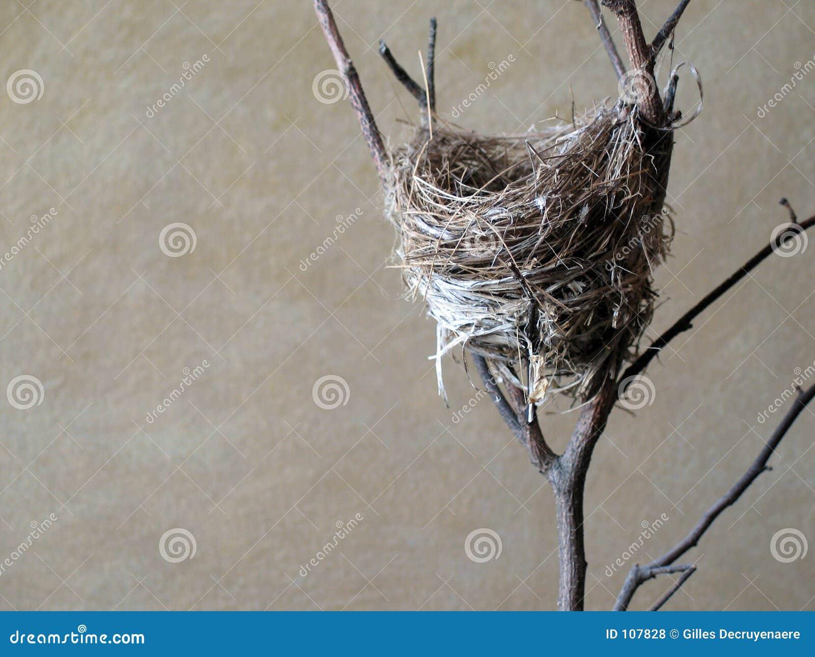 Ninho do pássaro pequeno.