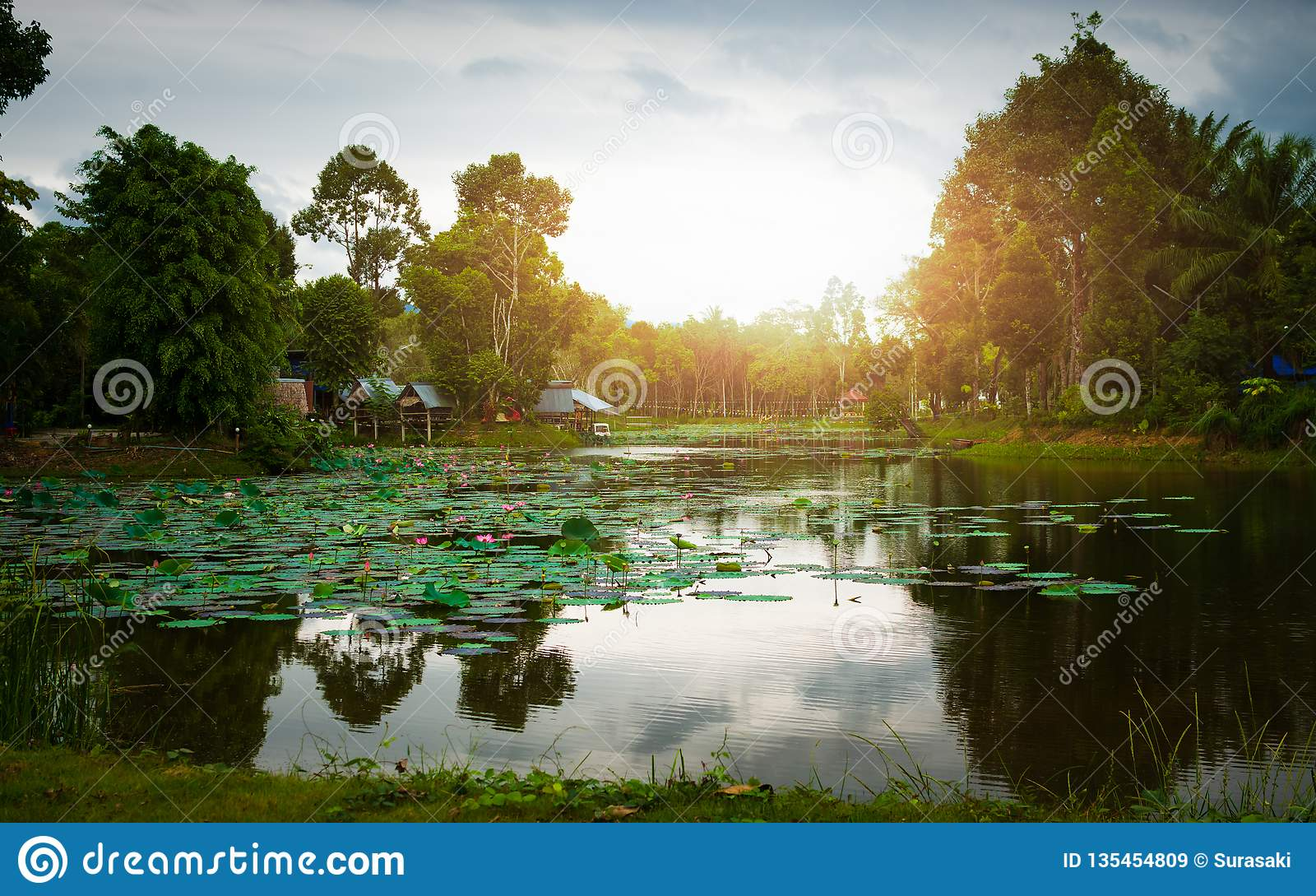 Nivelando a vista no campo de Tailândia