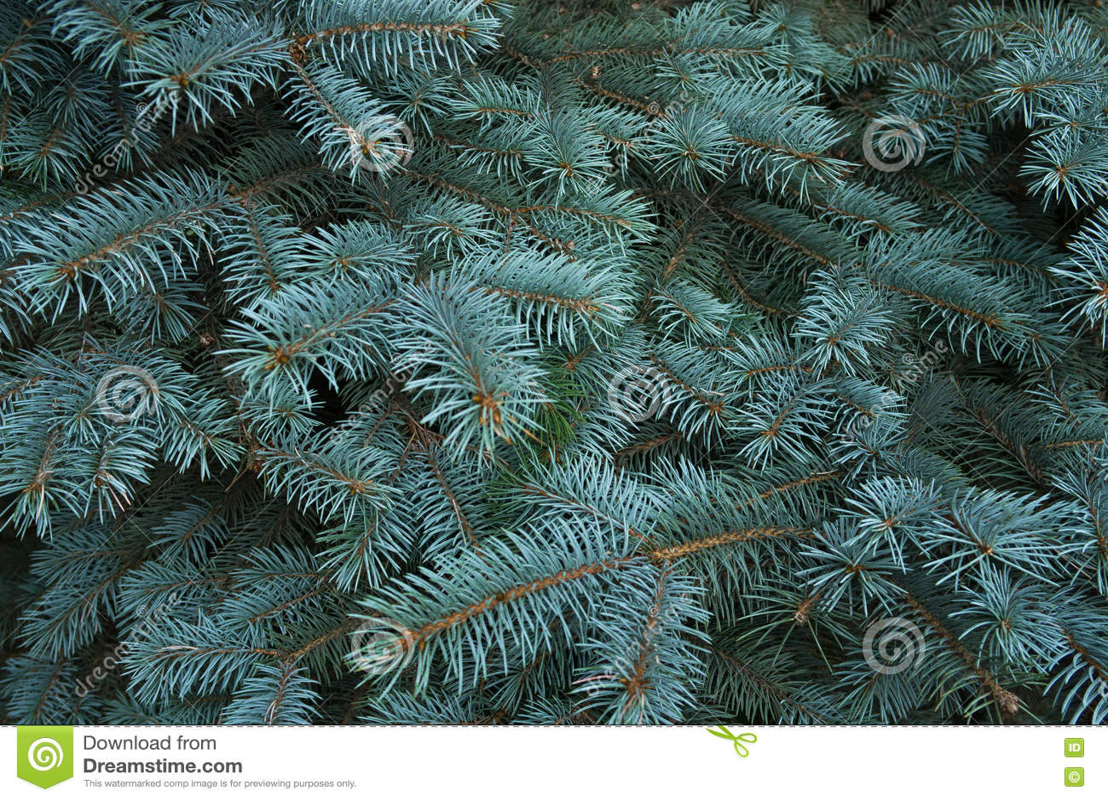 Noël ma version de vecteur d arbre de portefeuille