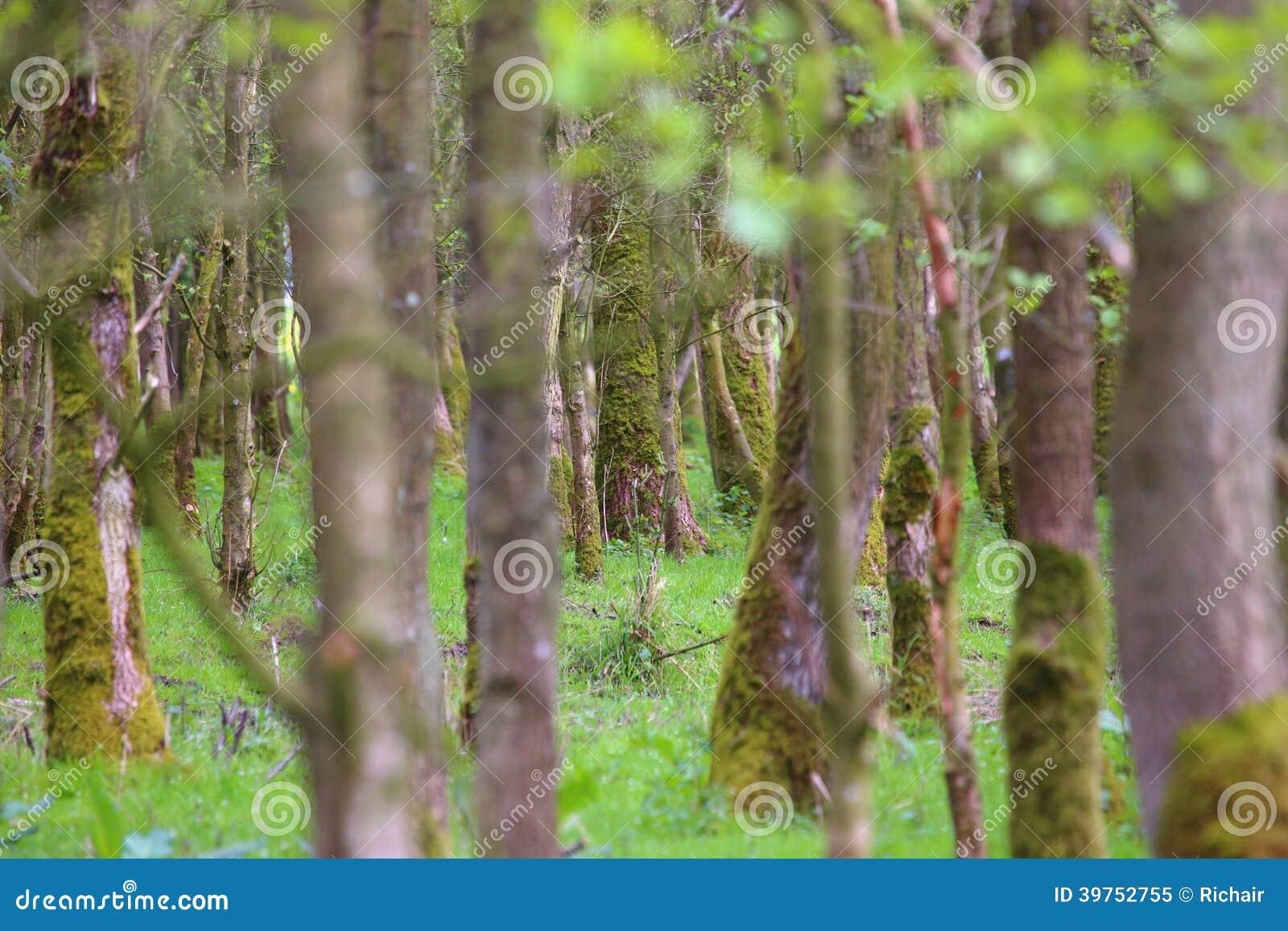 No puede ver la madera para los árboles