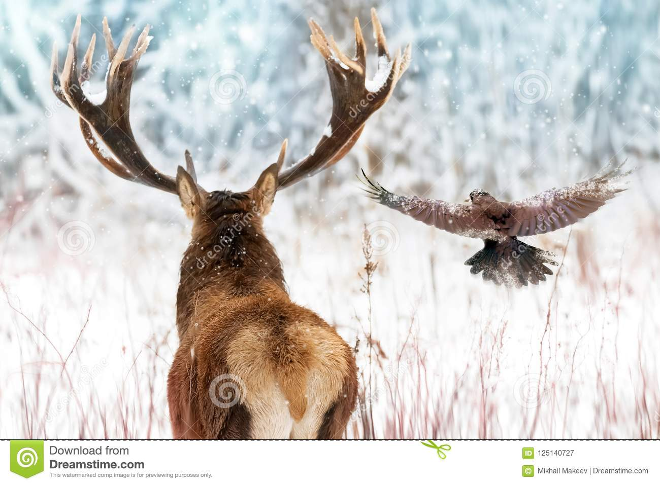 Noble deer with big horns and raven in flight in a winter fairy forest. Christmas winter image