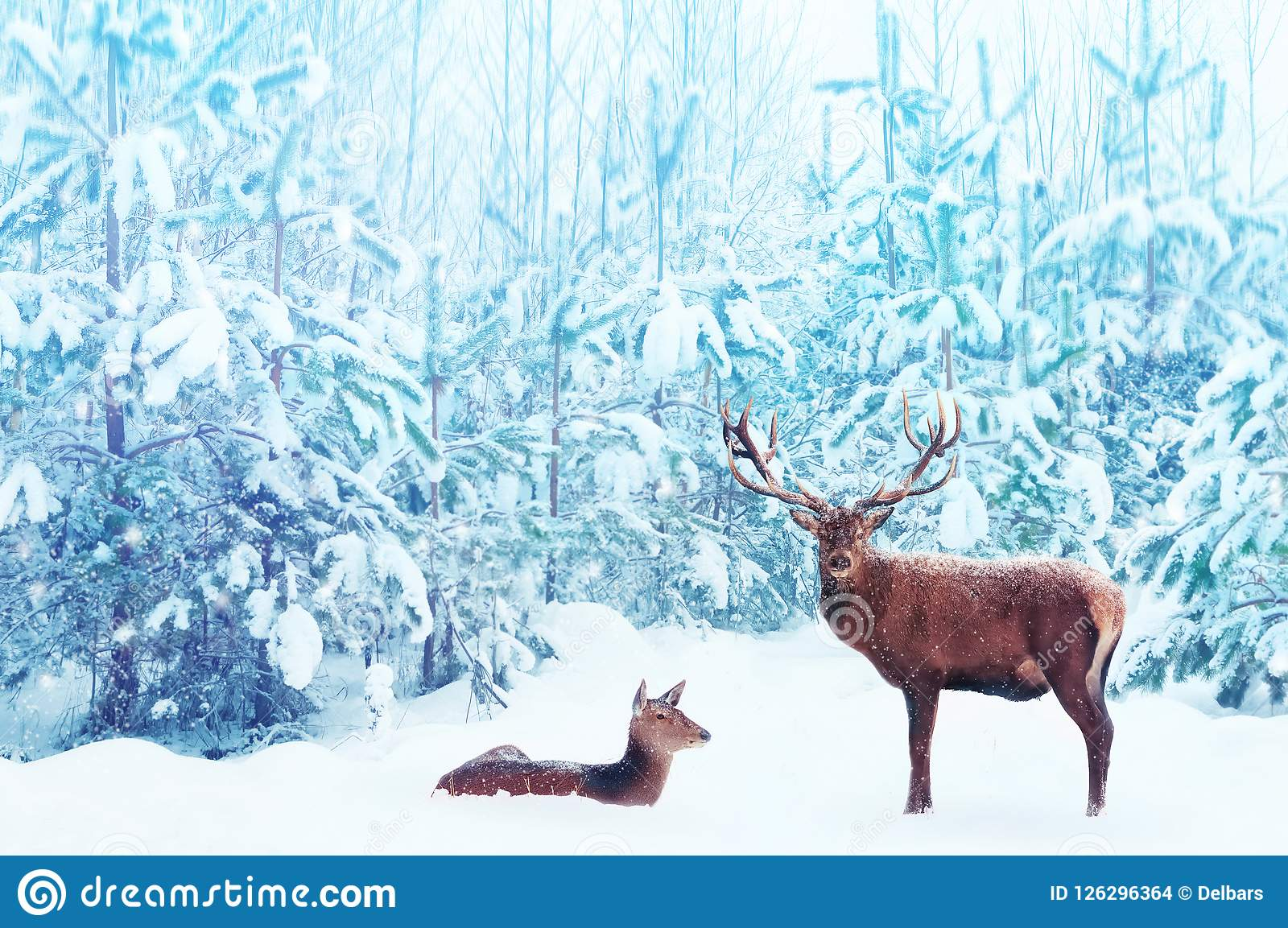 Noble deer male and female in a snowy winter blue forest. Artistic christmas fantasy image in blue and white color